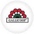 Gallicoop